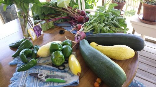 first 2016 garden crop